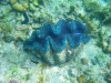 great-barrier-reef-6-small
