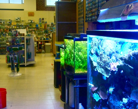 10 reasons why leonard nimoy is more interesting than you for Fish and more pet store